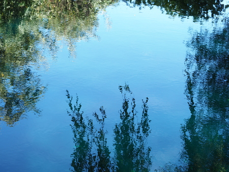 Trees and a blue sky reflected on the surface of a garden pond