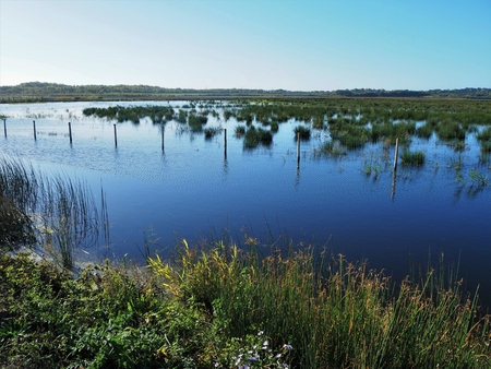 View over wetland habitat at St Aidan's Nature Park, Yorkshire, England