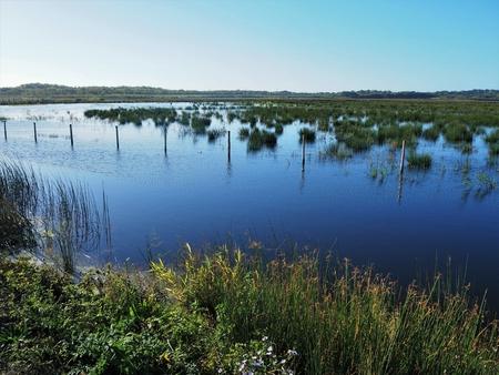 View over wetland habitat at St Aidan's Nature Park, Yorkshire, England