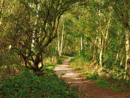 Path through the woods at Fairburn Ings nature reserve, Yorkshire, England, in dappled sunlight