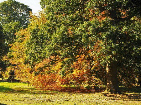Green and golden foliage in the Yorkshire Arboretum, England, in early autumn