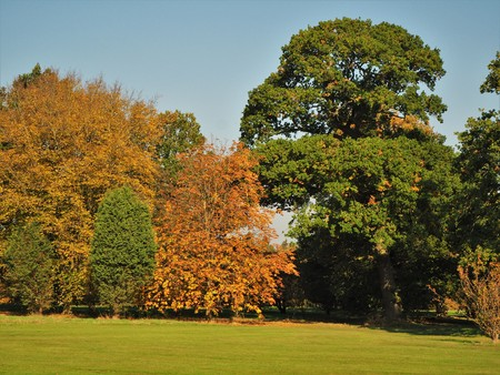 Golden autumn foliage in the Yorkshire Arboretum, England Stock Photo