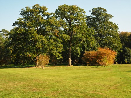 Trees in early autumn in the Yorkshire Arboretum, England Stock Photo
