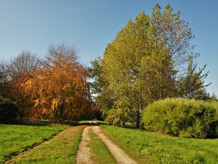 Track in the Yorkshire Arboretum towards trees with autumn foliage, North Yorkshire, England