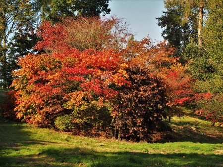 Beautiful red and orange autumn foliage in the Yorkshire Arboretum, England