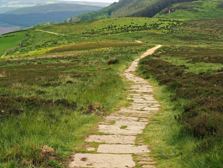 Cleveland Way footpath through heather moorland in the North York Moors National Park, England