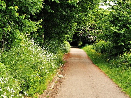 Narrow country lane through green trees and wild flowers near York, England
