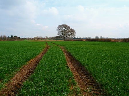 Tractor tracks through a cultivated field towards a lone tree near York, England