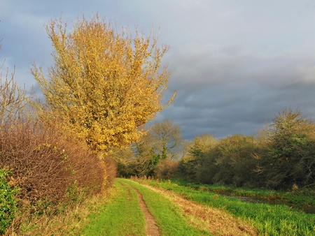 Grass track beside the Pocklington Canal, East Yorkshire, England, with colourful autumn vegetation and low afternoon light