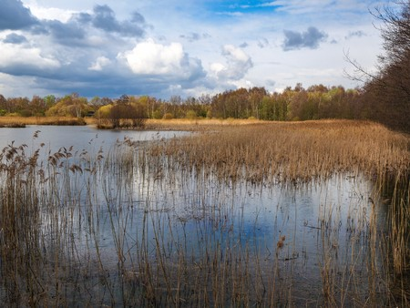 Wetlands and reeds at Potteric Carr nature reserve near Doncaster, South Yorkshire, England Banque d'images - 120851294