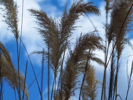 Tall ornamental grasses blowing in a gentle breeze against a blue summer sky