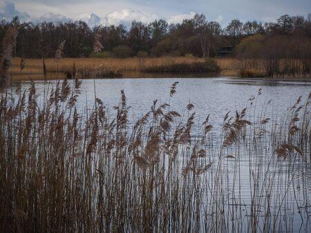 Canne che circondano un lago a Potteric Carr Riserva Naturale a Doncaster, South Yorkshire Archivio Fotografico
