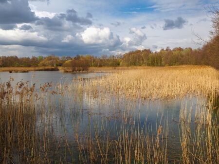 View over the reeds and wetlands at Potteric Carr Nature Reserve near Doncaster, South Yorkshire, England