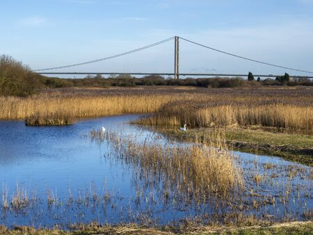 View over Far Ings Nature Reserve, Lincolnshire, England, with a pair of swans and a tower of the Humber Bridge in the background