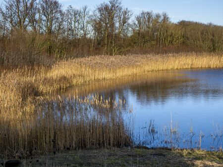 Afternoon light on a reed bed and wetland habitat at Far Ings Nature Reserve, North Lincolnshire, England