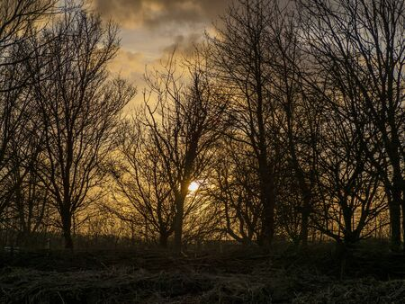 Sunset sky seen through the bare winter branches of trees at Far Ings Nature Reserve, North Lincolnshire, England