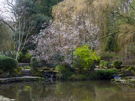 Pond and trees with early spring flowers in Peasholm Park, Scarborough, North Yorkshire, England