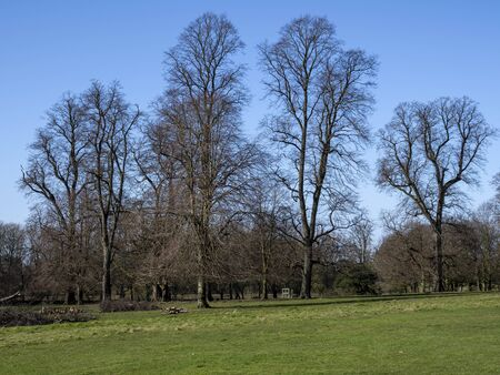 Trees with bare winter branches in the parkland at Beningbrough, North Yorkshire, England, with a blue sky