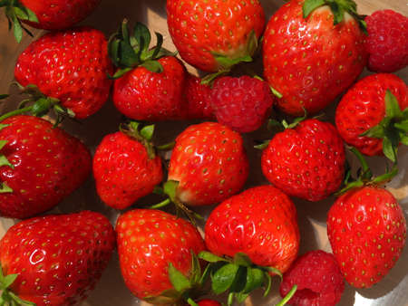 Closeup of bright red strawberries and raspberries harvested from a garden