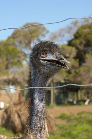 emu: Emu Granja