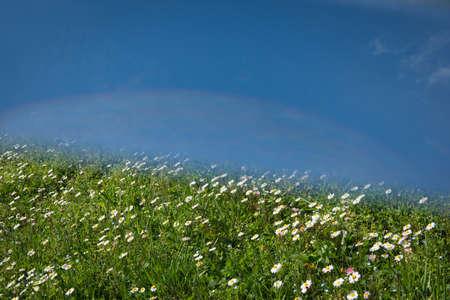 femal: Daisy landscape