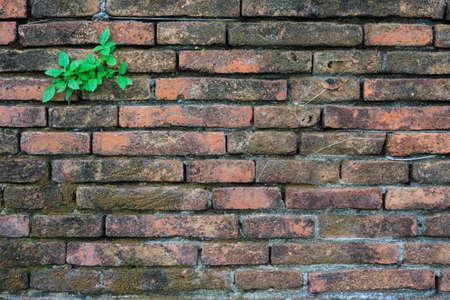 weed block: weed on wall Stock Photo