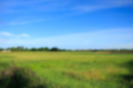 green background: meadow green blur background Stock Photo