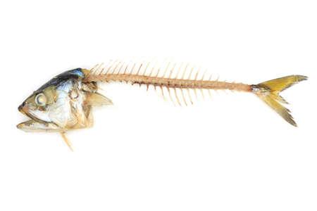 白い背景の上のサバ魚 写真素材