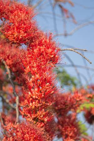 carpel: flower carpel red