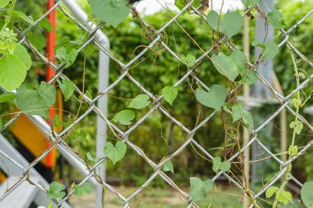 solid wire: vine on fence Stock Photo