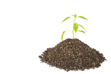 vert plantes arbre de germination espoir écologie croissante sur fond blanc