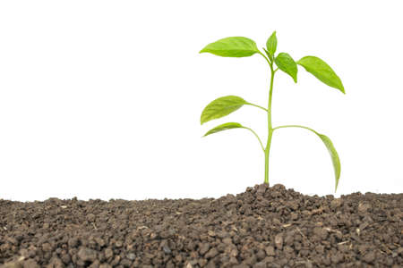 green tree sprout plants growing hope ecology on white background Stock Photo