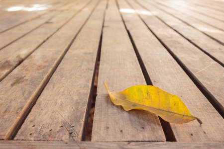 leaf dry on wooden floor in autumn