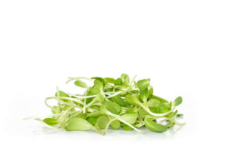 sprouting: green seed sprout germination growth ecology on white background