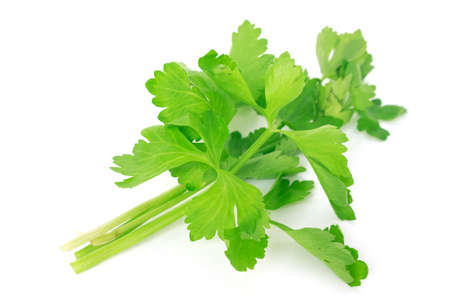 celery leaf vegetable organic food healthy nature on white background