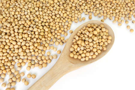 bean plant: soy bean plant seed healthy vegetable food nature background