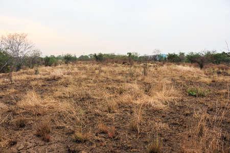 arid desert grass dry ground hot summer landscape
