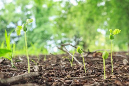germinación: seed germination growth into forest Foto de archivo