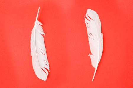 white feather: white feather on red background.