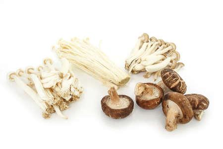 group mushrooms on white background. Stock Photo