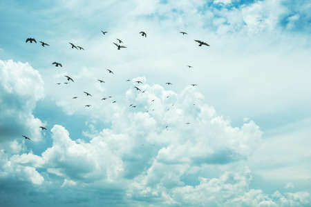 Many birds flying in the sky white cloud. Stock Photo