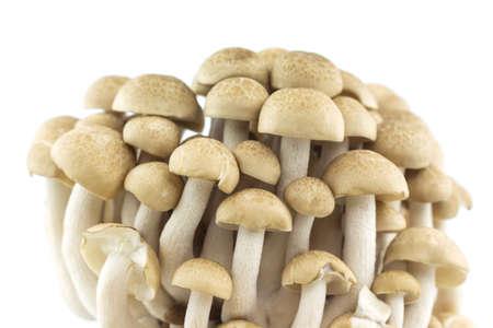 group mushroom on white background. Reklamní fotografie