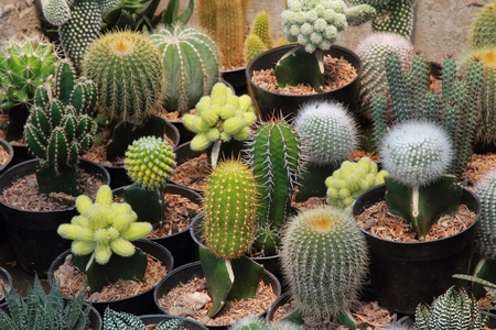 potted plant cactus: Assorted Cactus