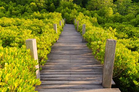 Wooden bridge and mangrove field. Boardwalk in Tung Prong Thong Golden Mangrove Field, Rayong Province, Thailand.