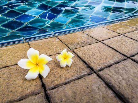 Frangipani flowers by the swimming pool.  Relax felling. 版權商用圖片 - 157303897