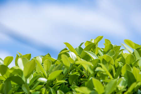 plant or leaves with blue sky background
