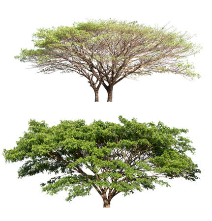 collection isolated tree isolated on white background