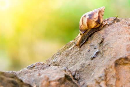 snail climb on rock stone with bur background  Stock Photo