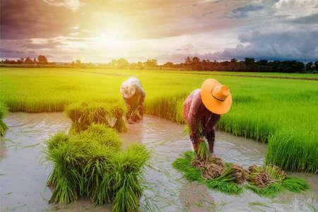 granjero que trabaja en la granja con puesta de sol Foto de archivo
