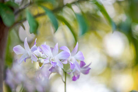 orchids flower with blurred background with bokeh light and green leaf